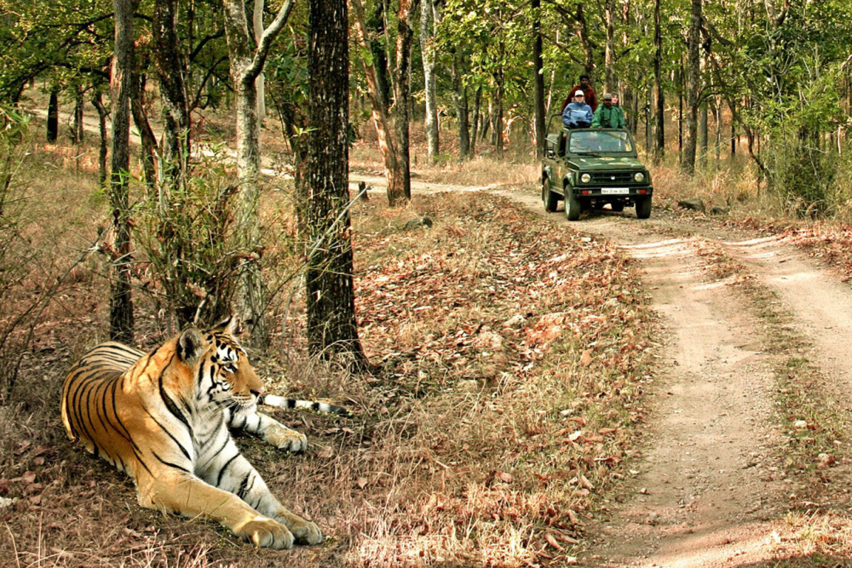 Bandhavgarh National Park Safaris