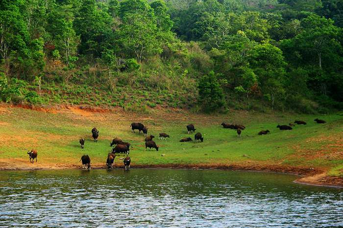 wildlife sanctuary of Periyar