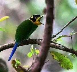 Sattal-Pangot Bird Photography Tour