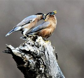 Delhi NCR Bird Photography Tours
