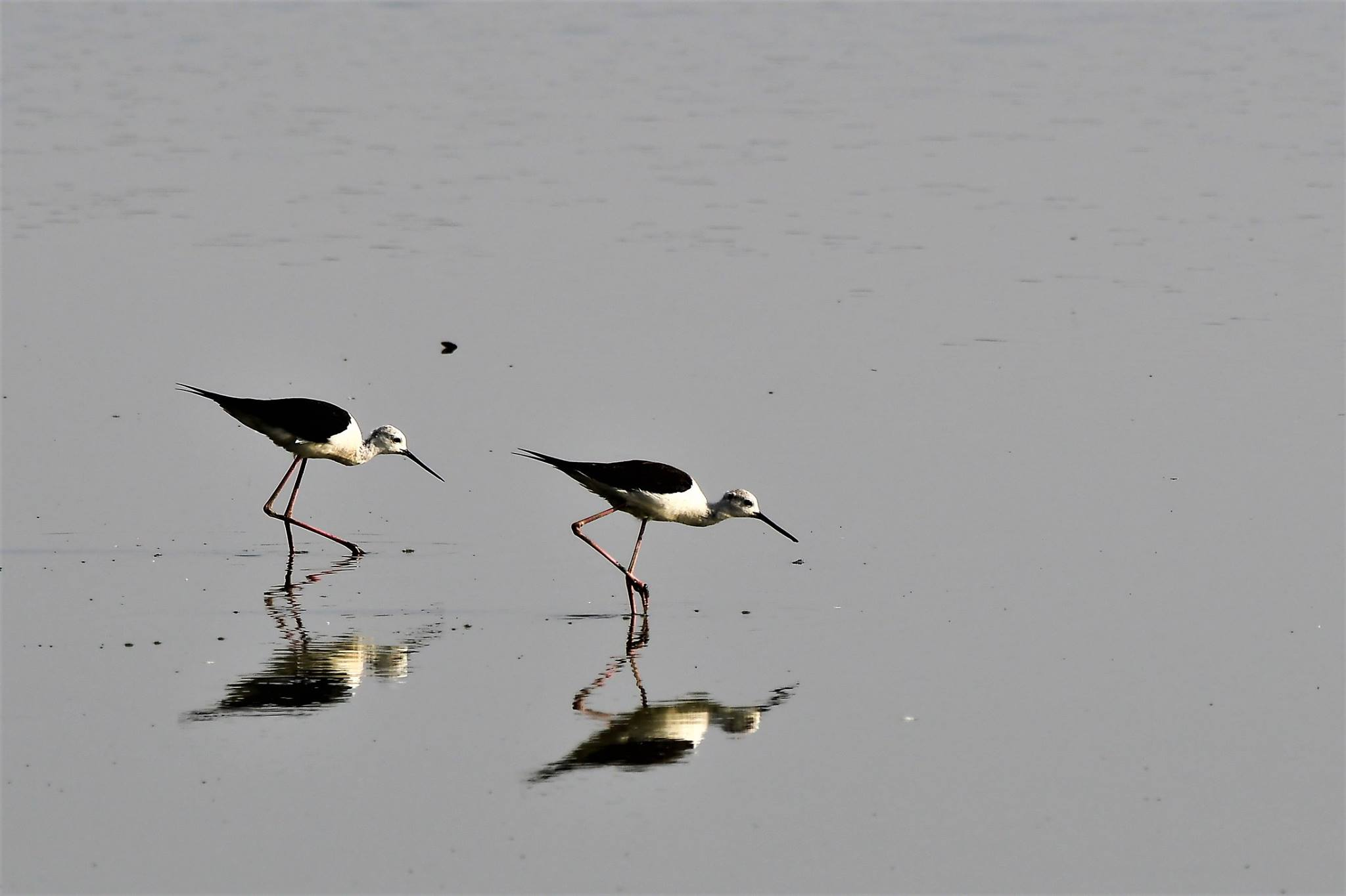 Delhi NCR Bird Photography Tours